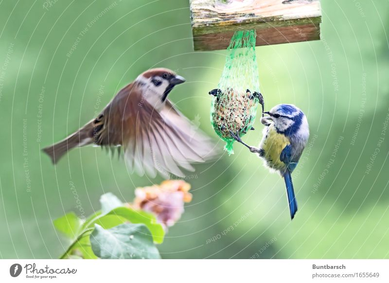 Meeting point feeding place Environment Nature Animal Wild animal Bird Wing Passerine bird Sparrow Songbirds Tit mouse Feather 2 Feed Birdhouse Movement Flying