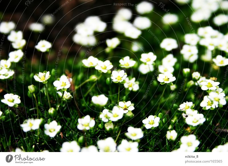 Nature Beautiful White Flower Green Plant Yellow Meadow Blossom Spring Blossoming Fragrance Beautiful weather Spring fever