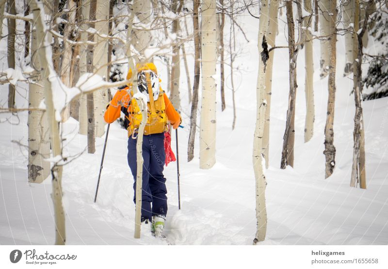 Winter hike through the aspens Vacation & Travel Adventure Snow Mountain Sports Climbing Mountaineering Skiing Human being Adults 1 18 - 30 years