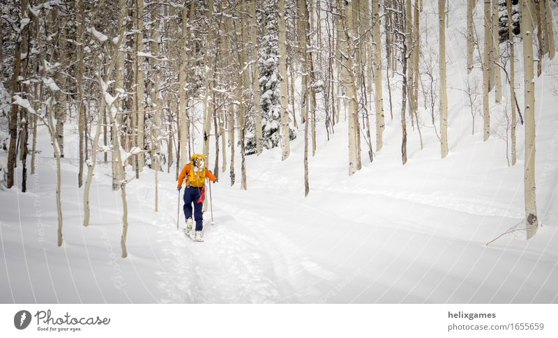 hiking through the trees Vacation & Travel Adventure Winter Snow Mountain Sports Climbing Mountaineering Skiing Human being Adults 1 Nature Landscape Tree