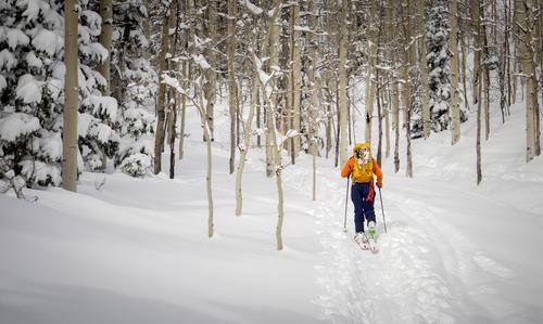 Skier in the aspen trees Human being Nature Vacation & Travel Youth (Young adults) Man Blue White Tree Landscape Winter Forest 18 - 30 years Mountain Adults