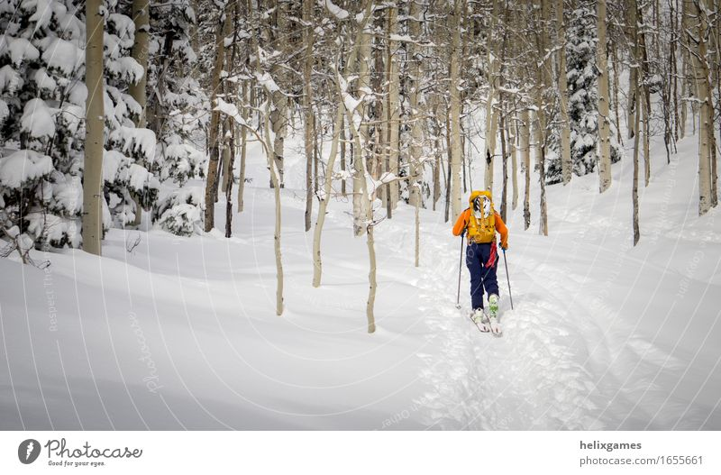 Skier in the aspen trees Human being Nature Vacation & Travel Youth (Young adults) Man Blue White Tree Landscape Winter Forest 18 - 30 years Mountain Adults Snow Sports