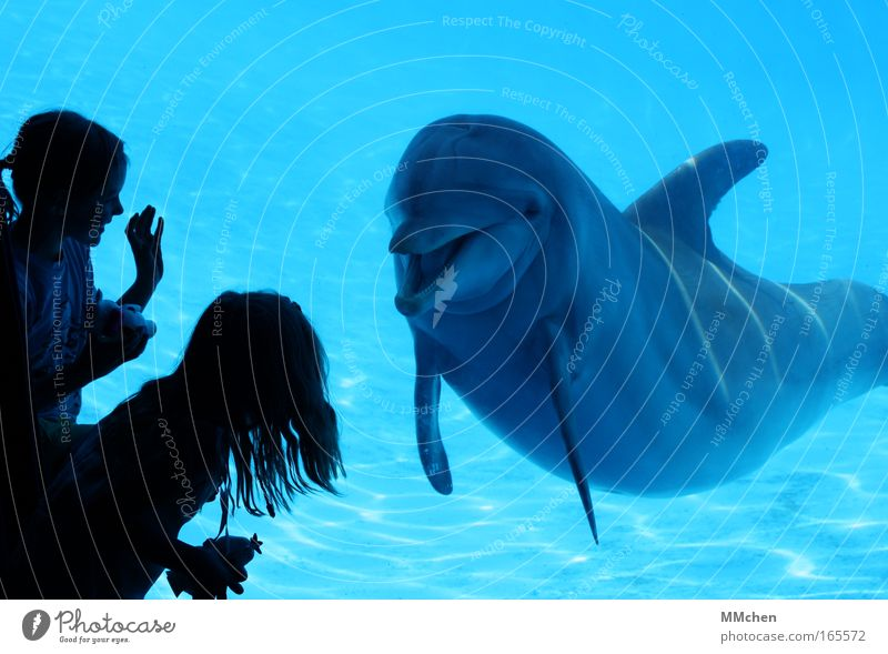 Child Nature Water Girl Blue Joy Animal Playing Happy Laughter Happiness Communicate Swimming pool Whale Observe