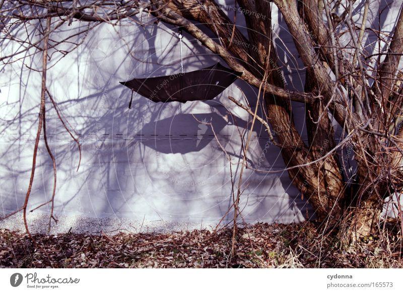 Nature Tree Joy Life Wall (building) Emotions Freedom Wall (barrier) Sadness Dream Rain Design Esthetic Change Uniqueness Communicate