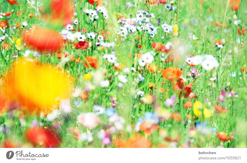 moin moin moin mo(h)ntag! Nature Plant Spring Summer Beautiful weather Flower Grass Leaf Blossom Wild plant Poppy Garden Park Meadow Blossoming Fragrance Faded
