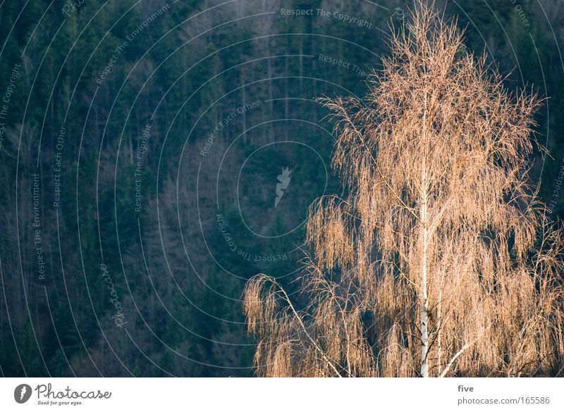 Allgäu Tree Colour photo Exterior shot Deserted Day Shadow Light (Natural Phenomenon) Sunlight Nature Plant Beautiful weather Forest Hill Hiking Green