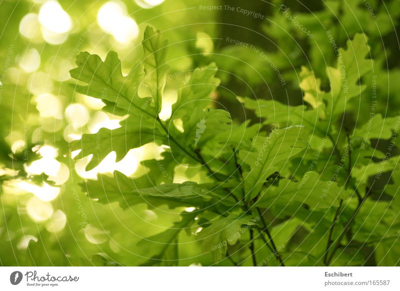 forest lights Leisure and hobbies Summer Nature Plant Beautiful weather Leaf Foliage plant Friendliness Fresh Bright Near Natural Positive Clean Warmth Soft