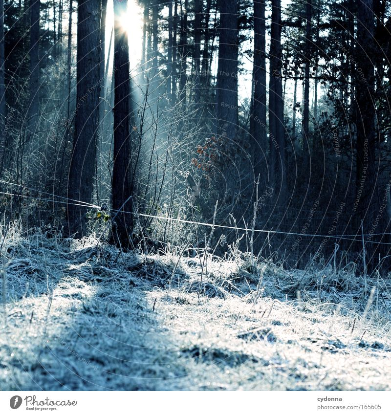 ray of hope Colour photo Exterior shot Deserted Copy Space right Copy Space bottom Day Sunlight Sunbeam Shallow depth of field Central perspective Nature Winter