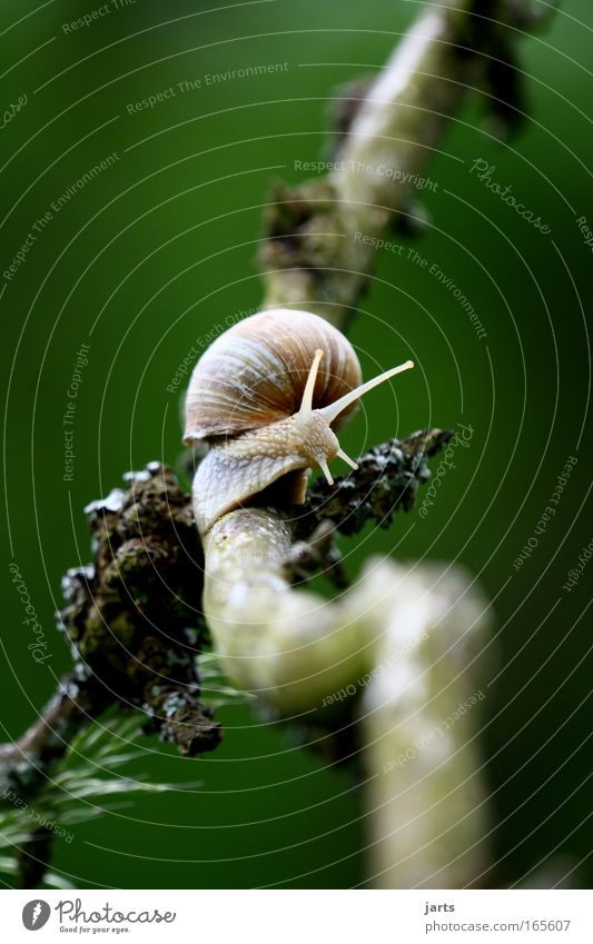 Animal Calm Hiking Observe Target Snail Orientation