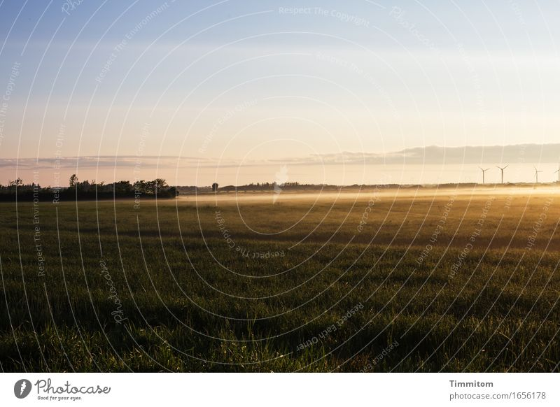 The end comes first. Vacation & Travel Environment Nature Landscape Sky Sunlight Beautiful weather Grass Bushes Field Denmark Esthetic Natural Ground fog