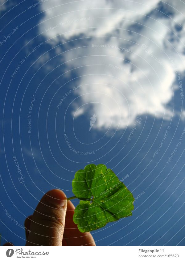 Sky Hand Nature Blue Green Plant Leaf Clouds Colour Above Air Bright Environment Fingers Hope Future