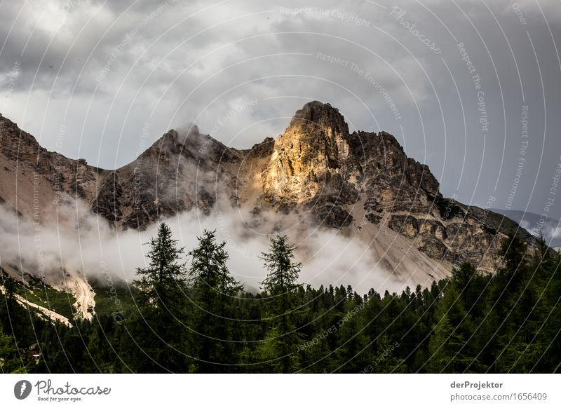 Nature Vacation & Travel Plant Landscape Clouds Animal Far-off places Forest Mountain Environment Freedom Rock Tourism Hiking Trip Beautiful weather
