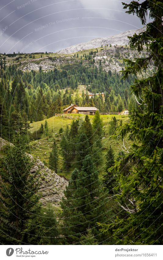 Sunny mountain pasture in the Dolomites Vacation & Travel Tourism Trip Adventure Far-off places Freedom Mountain Hiking Environment Nature Landscape Plant