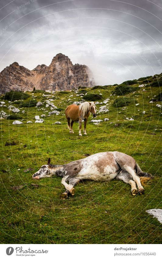 End time mood in the Dolomites Vacation & Travel Tourism Trip Adventure Far-off places Freedom Mountain Hiking Environment Nature Landscape Plant Animal Summer