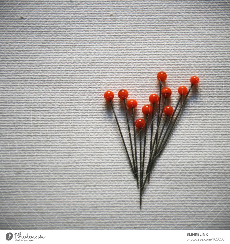 bouquet of needles Colour photo Detail Copy Space left Copy Space top Neutral Background Day Bird's-eye view Lifestyle Design Leisure and hobbies Handcrafts