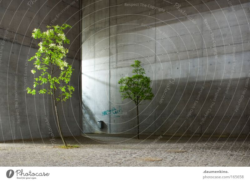 Nature Architecture Tree Plant Leaf Wood Tree trunk Branch Thread Life Death Concrete Light Shadow Building formwork Illuminate Gravel