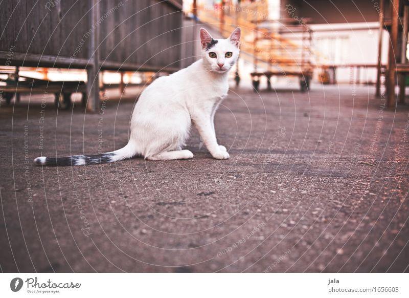 Cat City Animal Esthetic Sit Curiosity Pet