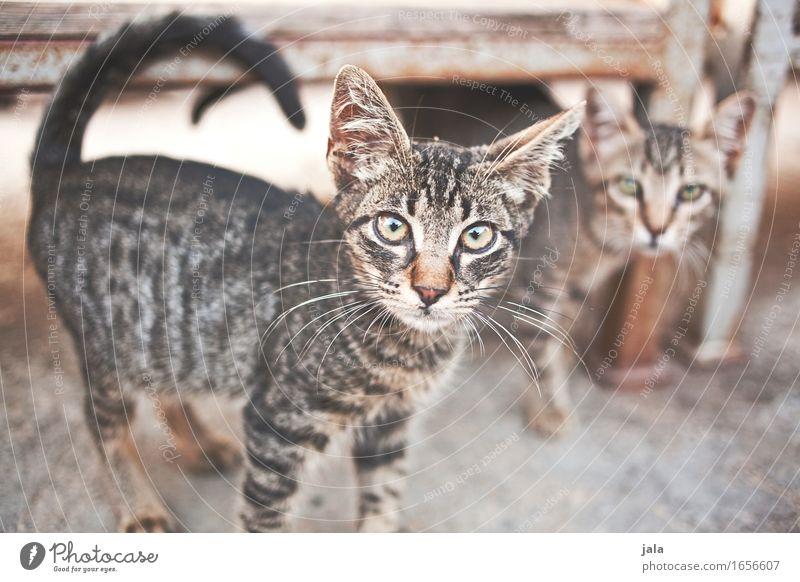 Cat Beautiful Animal Cute Curiosity Pet Interest