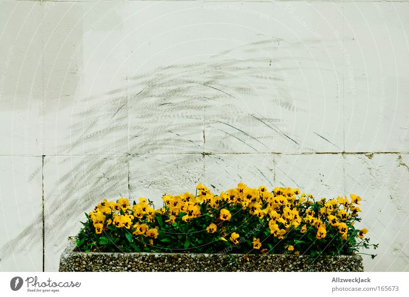 Flower House (Residential Structure) Wall (building) Lanes & trails Movement Wall (barrier) Culture Trashy BMX bike Stunt Window box Pansy Wallride