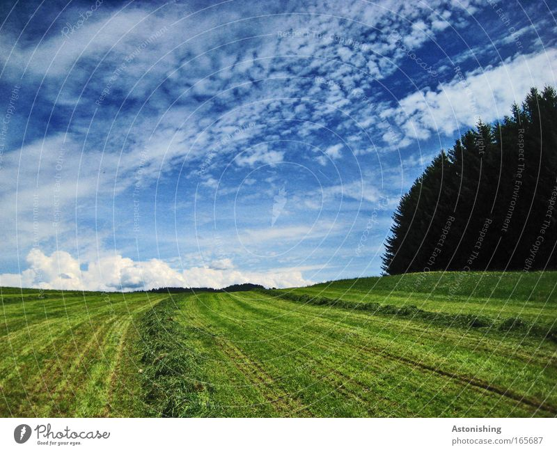 Nature Sky Tree Plant Summer Calm Clouds Far-off places Forest Meadow Grass Landscape Line Weather Environment Horizon