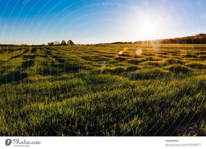 A grass meadow in the early morning with sunbeams. Herbs and spices Summer Garden Nature Plant Rain Grass Leaf Meadow Drop Growth Fresh Bright Wet Green Colour