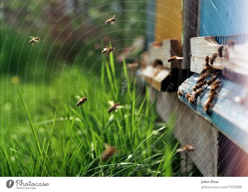 Blue Green Plant Summer Meadow Spring Wood Flying Work and employment Transport Beautiful weather Communicate Bee Blade of grass Flock Smart