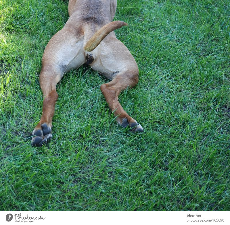 Nature Dog Green Summer Joy Animal Calm Relaxation Meadow Garden Park Brown Contentment Wait Lie Sleep