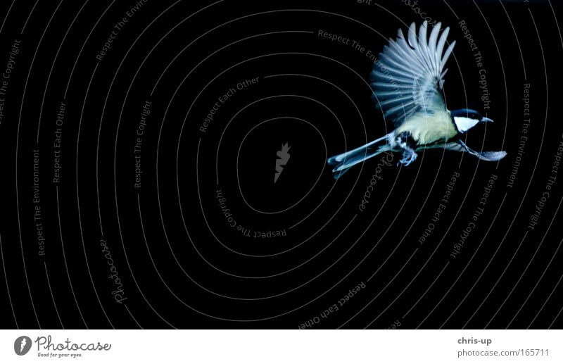 Nature Beautiful Black Animal Yellow Dark Movement Freedom Air Bird Flying Speed Esthetic Feather Wing Wild animal