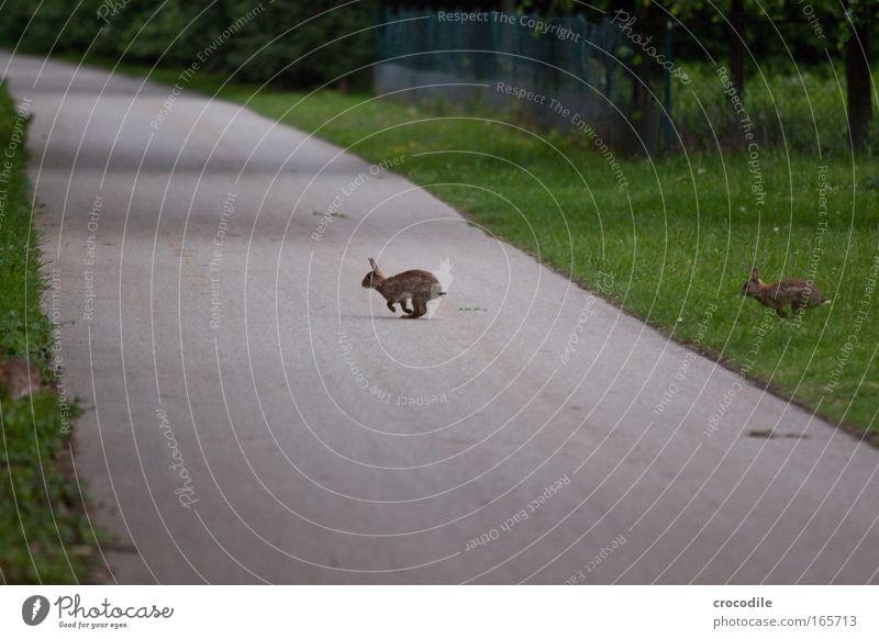 Nature Joy Animal Environment Meadow Fear Wild animal Dangerous Pelt Running Traffic infrastructure Stress Hare & Rabbit & Bunny Breathe Paw Pedestrian