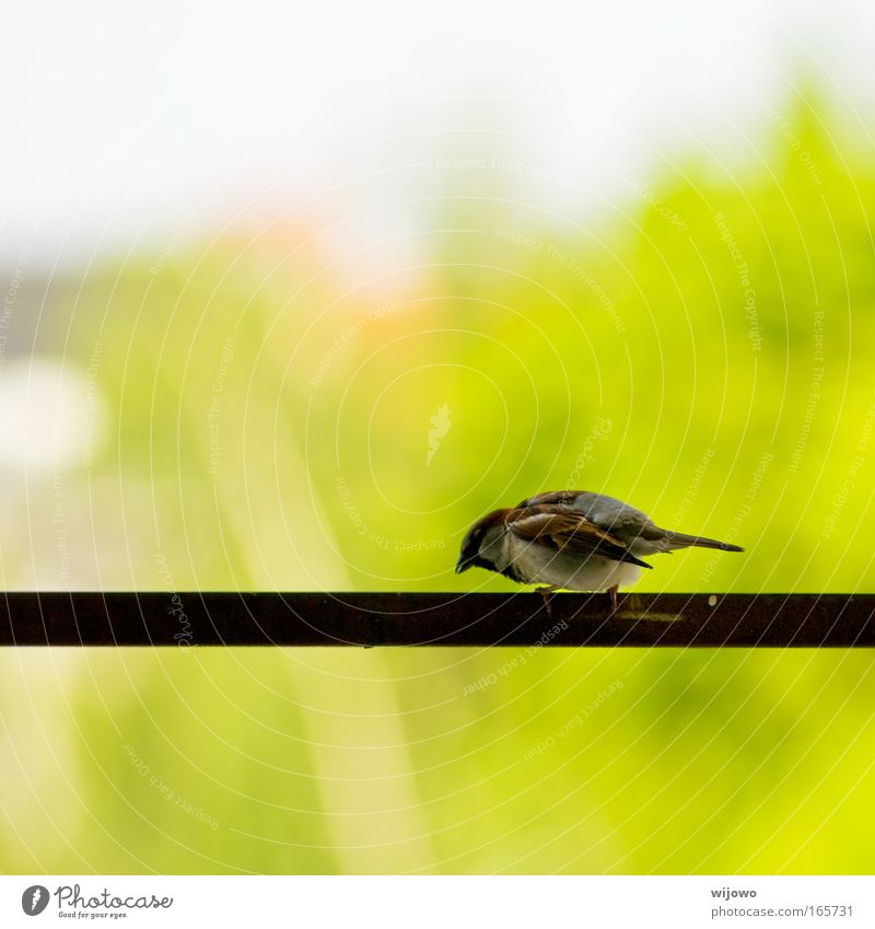 afraid of heights Colour photo Exterior shot Deserted Copy Space top Copy Space bottom Day Shallow depth of field Animal portrait Downward Wild animal Bird Wing