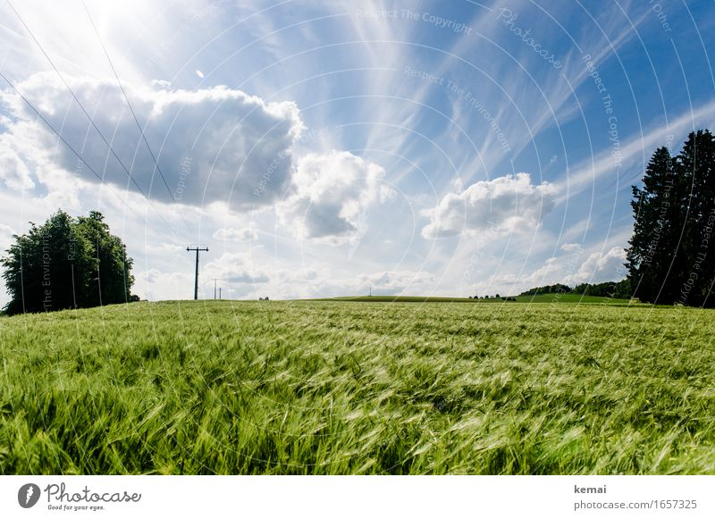 Sky Nature Plant Blue Summer Beautiful Green Landscape Clouds Environment Warmth Field Growth Authentic Beautiful weather Agriculture