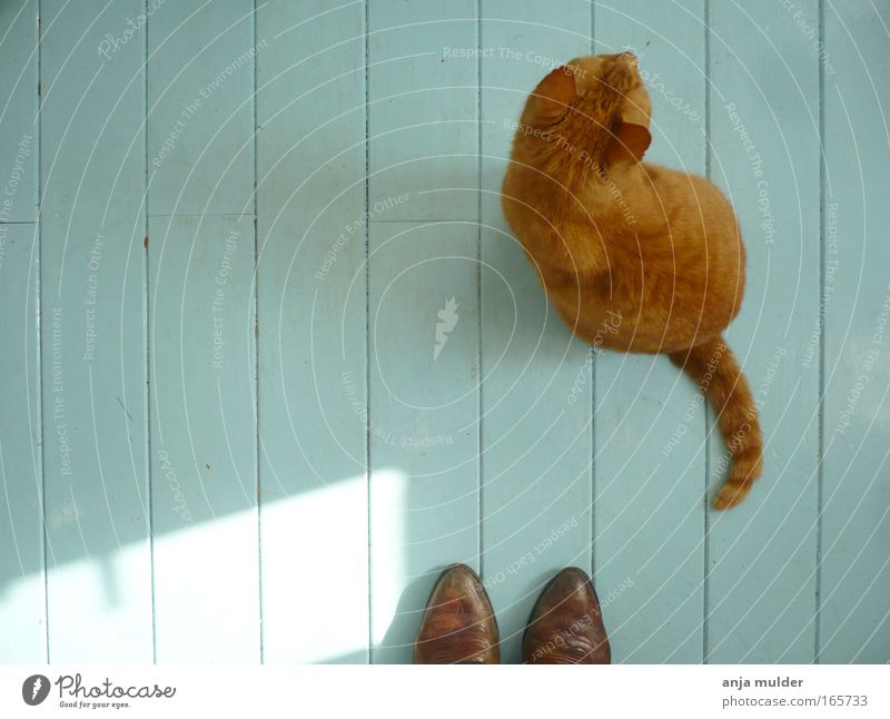 cat Colour photo Morning Day Shadow Contrast Silhouette Sunlight Bird's-eye view Animal portrait Downward Footwear Boots Pet Cat 1 Wood Stripe Observe Together