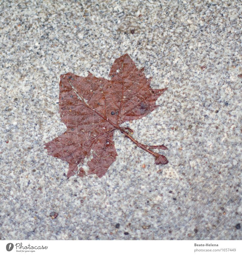 autumn art Nature Autumn Tree Leaf Park Stone Old Movement To hold on To dry up Esthetic Threat Thin Sharp-edged Brown Gray Emotions Variable