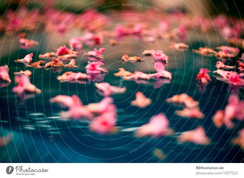 AST 9 | Flower Spell2 Environment Nature Blossom Lie Exceptional Beautiful Blue Pink Moody Colour photo Exterior shot Macro (Extreme close-up) Reflection Blur