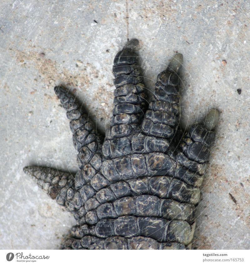 HIGH FIVE JETZ', NE?! Crocodile Hand high five Handshake Smash give sb. a high five Alligator Leather croc Paw Animal Reptiles Trust Copy Space top