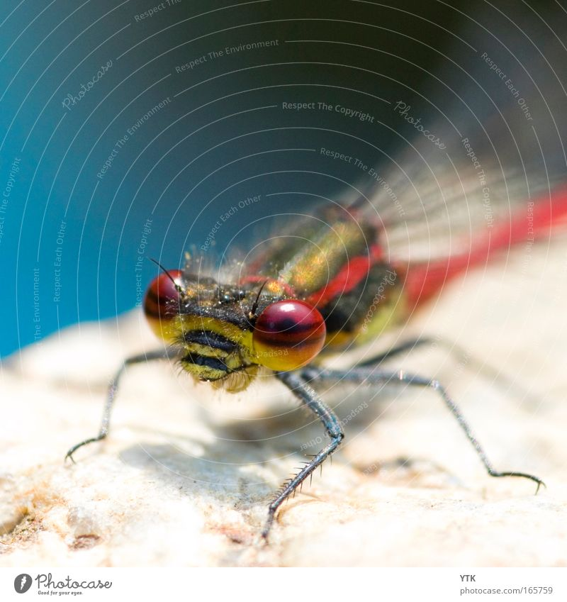 Nature Blue Red Animal Environment Eyes Life Movement Stone Flying Wait Esthetic Wing Observe Curiosity Animal face