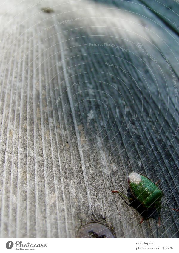 the_small_bug Bug Green Wood Wooden floor Insect Crawl quick little guy Detail Perspective far down Shield bug