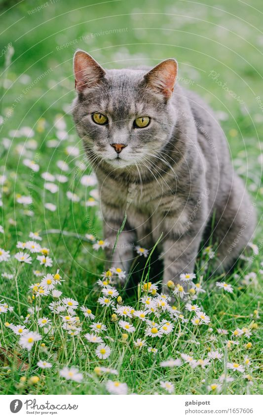 Mr. Kater in summer happiness ... Nature Landscape Summer Beautiful weather Flower Grass Garden Meadow Animal Pet Cat 1 Observe Sit Friendliness Cuddly Cute