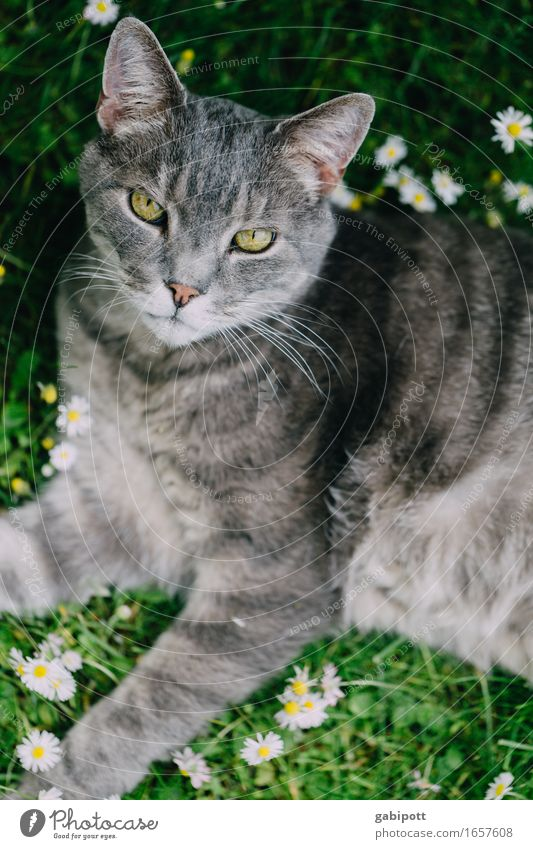 Cat Nature Summer Green Flower Relaxation Animal Spring Meadow Natural Happy Gray Living or residing Contentment Lie Idyll