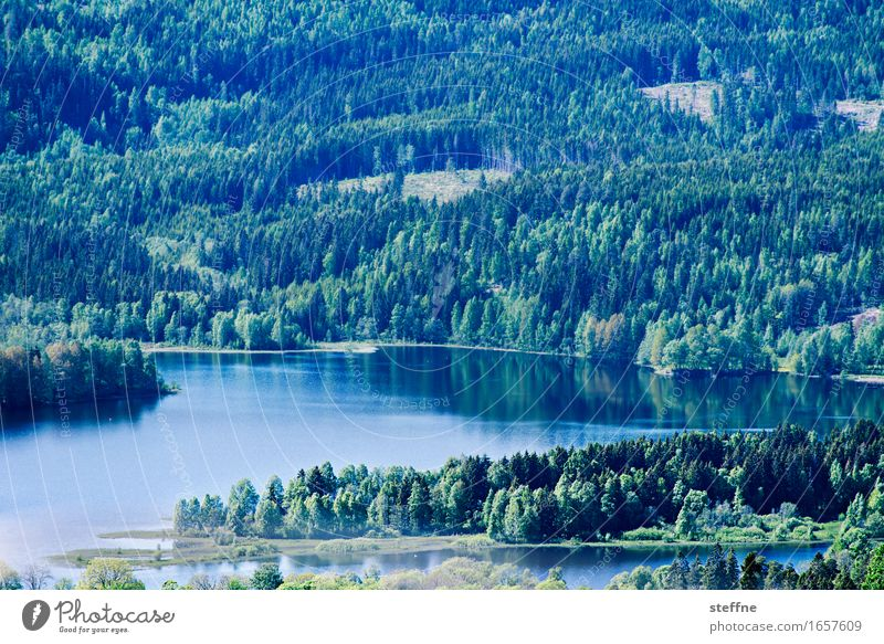 Nature Summer Landscape Forest Mountain Spring Lake Idyll Beautiful weather Lakeside Norway Oslo