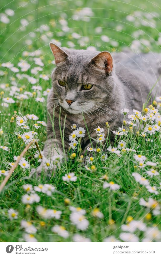 Cat Nature Vacation & Travel Plant Summer Green Relaxation Animal Meadow Grass Happy Garden Park Contentment Lie Joie de vivre (Vitality)