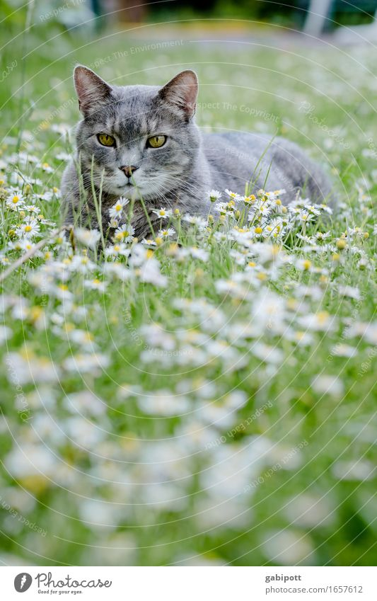 Cat Nature Vacation & Travel Summer Landscape Flower Relaxation Animal Spring Meadow Natural Happy Garden Contentment Leisure and hobbies Idyll