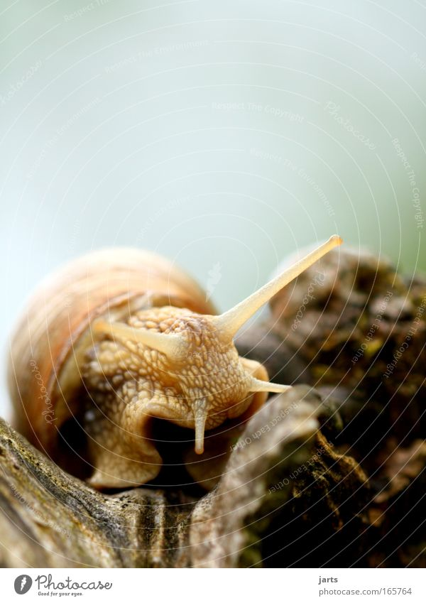 shhhh... Colour photo Exterior shot Close-up Copy Space top Day Shallow depth of field Worm's-eye view Animal portrait Front view Looking into the camera Park