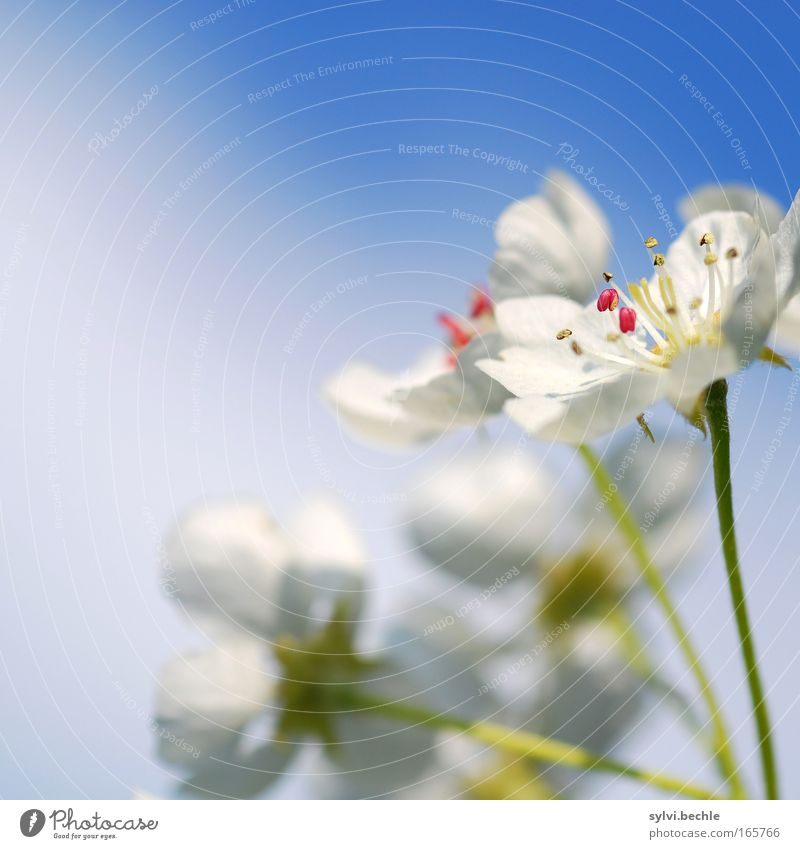 Beautiful Sky White Green Blue Plant Clouds Life Blossom Spring Pink Growth Open Soft Change Delicate