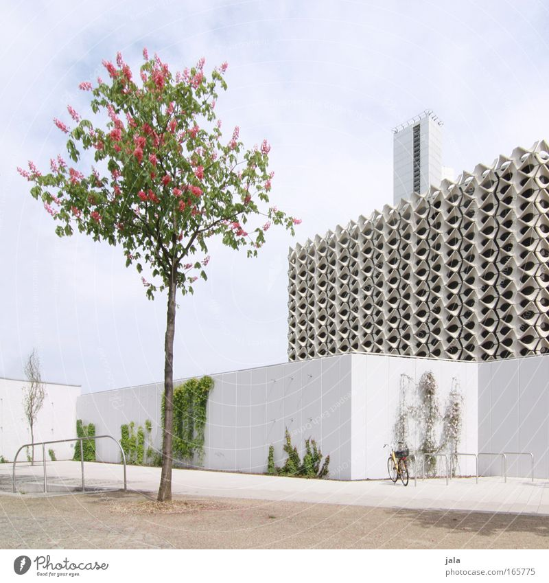 Sky White Beautiful Tree Plant House (Residential Structure) Wall (building) Architecture Wall (barrier) Building Bright Facade Large Places Modern Perspective