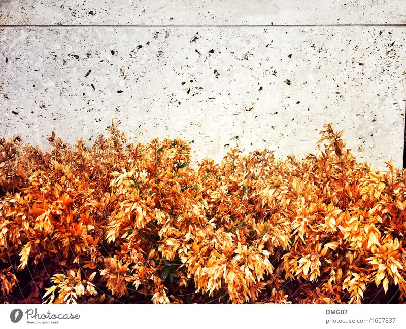 autumn Environment Nature Spring Summer Autumn Climate Climate change Weather Plant Flower Grass Bushes Leaf Blossom Village Fishing village Small Town