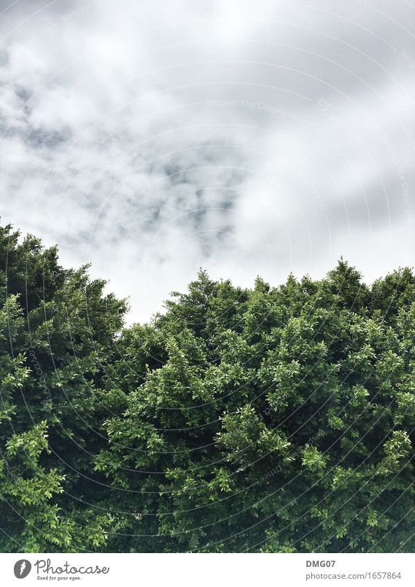 parted Environment Nature Landscape Air Sky Clouds Storm clouds Spring Summer Autumn Winter Climate Climate change Weather Plant Tree Leaf Garden Park Forest