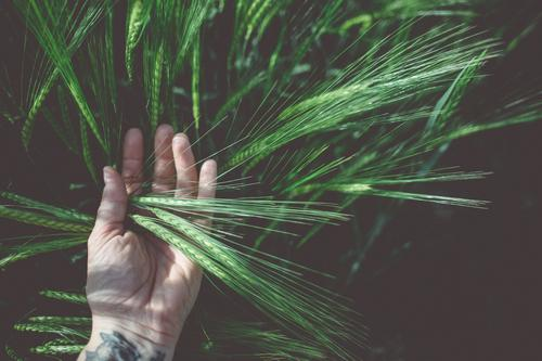 Human being Nature Plant Summer Beautiful Green Hand Life Field Study Fingers Beautiful weather Touch To hold on Discover Tattoo
