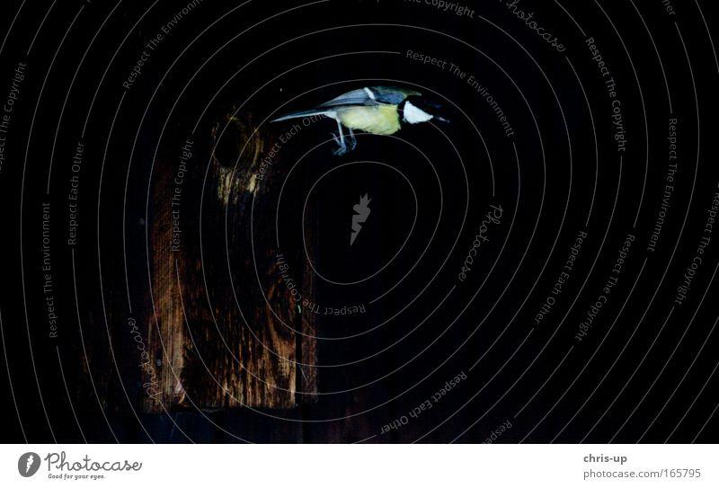 Nature Beautiful Animal Black Dark Freedom Movement Jump Air Bird Elegant Flying Wild animal Free Speed Wing