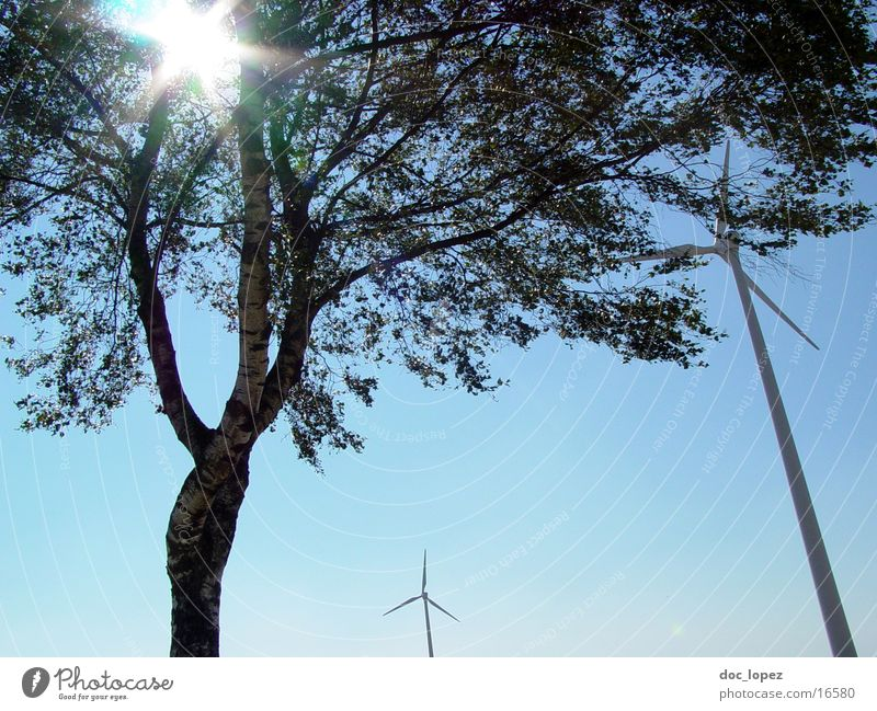 the_sun_against_1 Tree Dazzle Moody Back-light Hissing Sun Wind energy plant Sky Landscape generate alternative energy